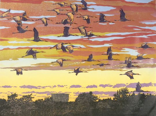 sandhill cranes returning to roost the central CA